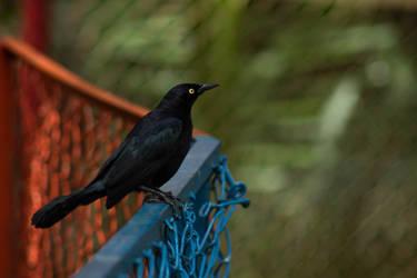 Obsidian bird