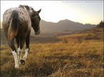 Appaloosa Meadow