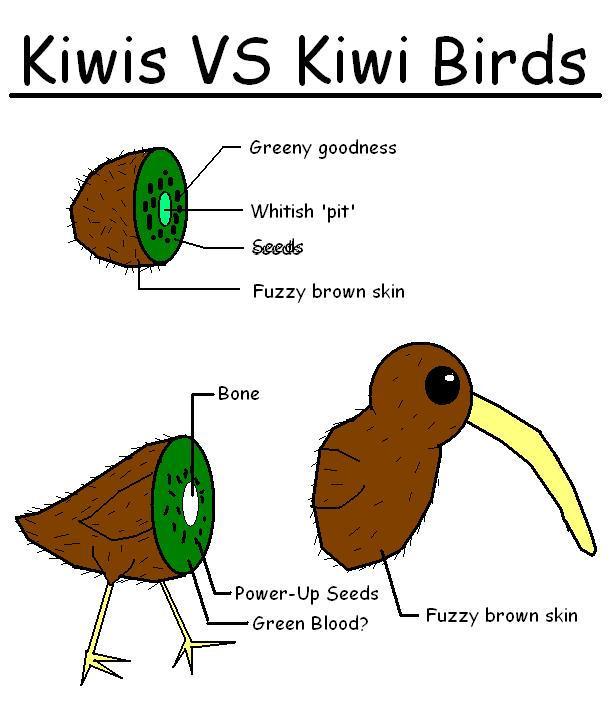 Kiwi VS Kiwi Bird by shibbynempahcold