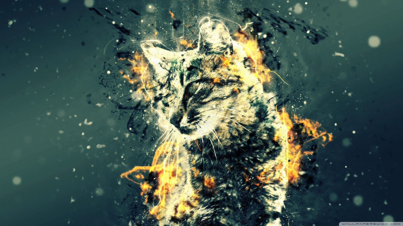 Turkish Cats Tabby-wallpaper-1366x768 by SuperJey