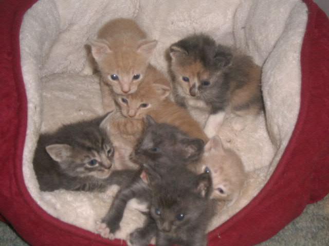 7 kittens by kingfox66