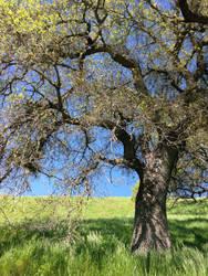 Tree Stock #3 by DeepSeaBreakfast