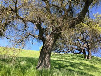 Tree Stock #2 by DeepSeaBreakfast