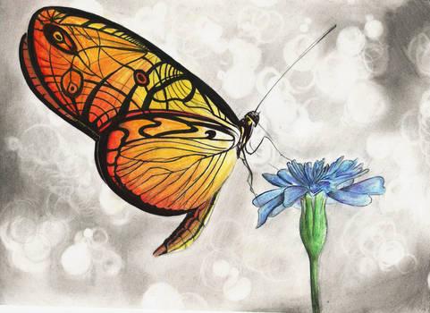 Fire Moth