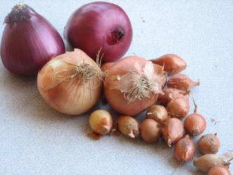 onions-- by aravani