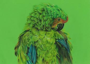 Parrot by mojunheem