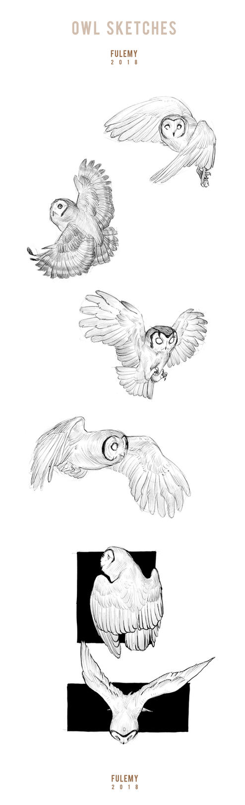 Owl Sketches 2018 by Fulemy