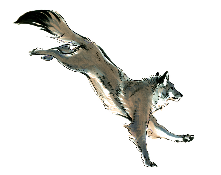 Running Wolf Sketch By Fulemy On Deviantart