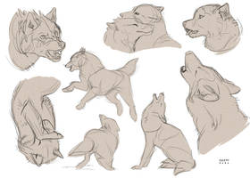 Wolves Sketches