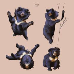 Sloth/Moon Bear Studies