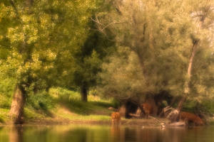 Cows on the Riverbank by houselightgallery