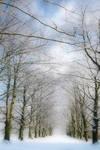 Winter Beech Avenue