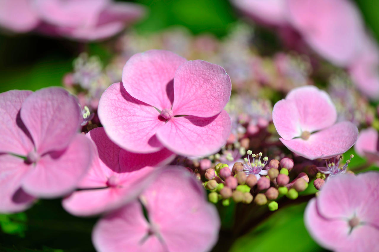 Small Little Light Pink Flowers By Pohlmannmark On Deviantart