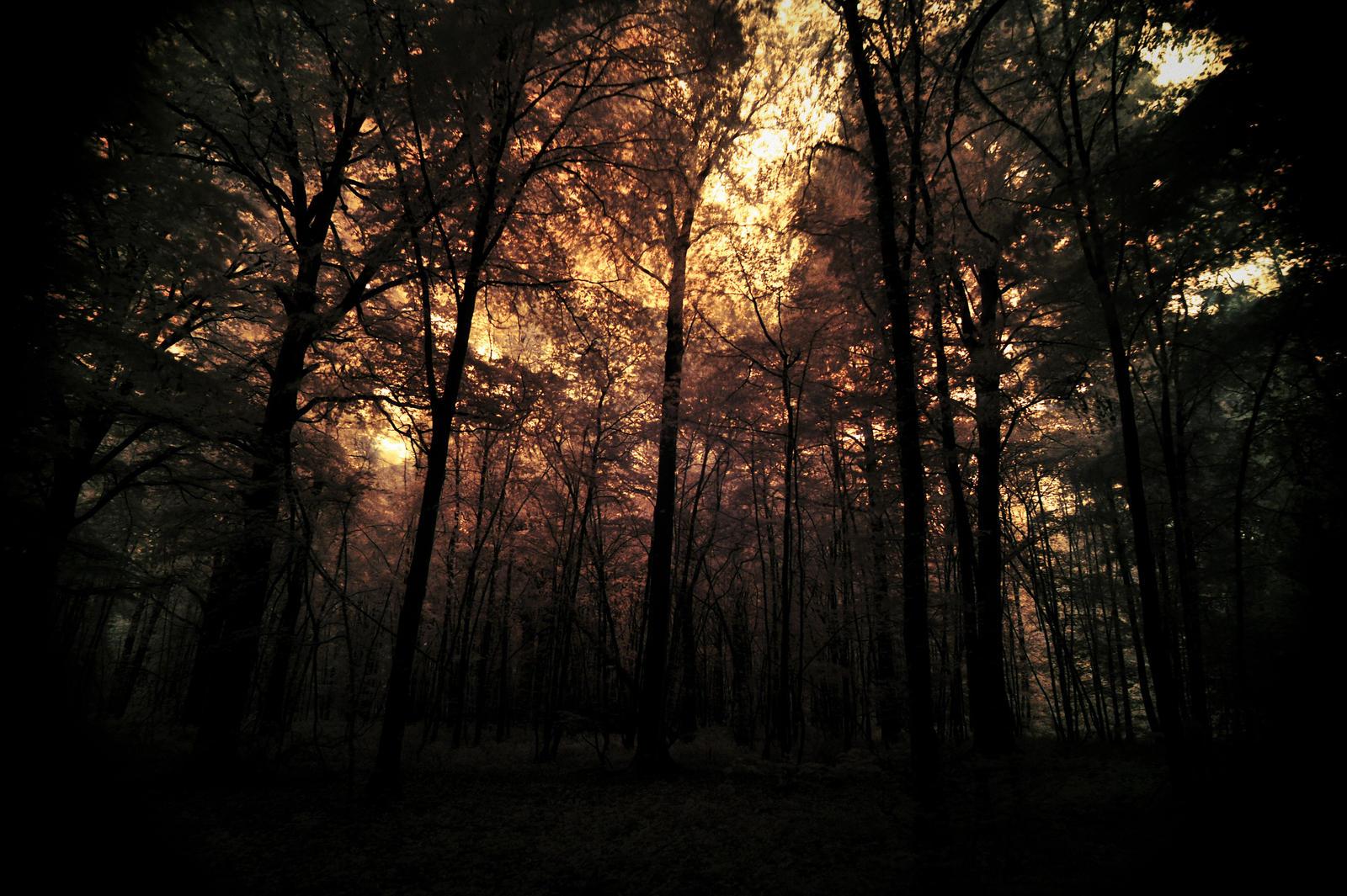Dark Forest by pohlmannmark