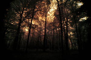 Dark Forest by pohlmannmark