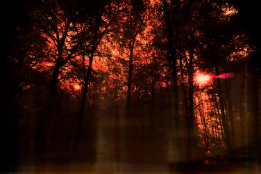 Ghosts in the wood by pohlmannmark