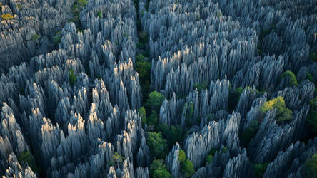 Stone Forest (travel)(history) by thewriter197