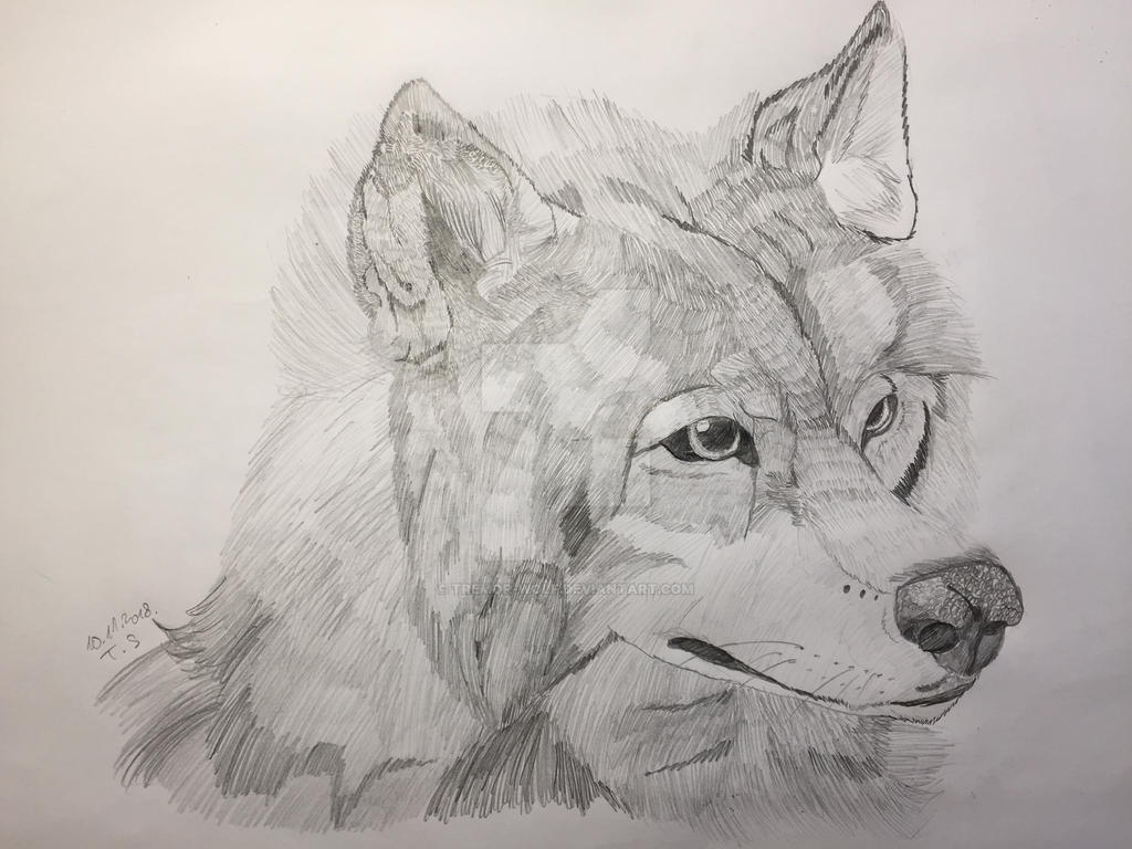 Wolf pencil drawing by wolfie the dreamer on deviantart
