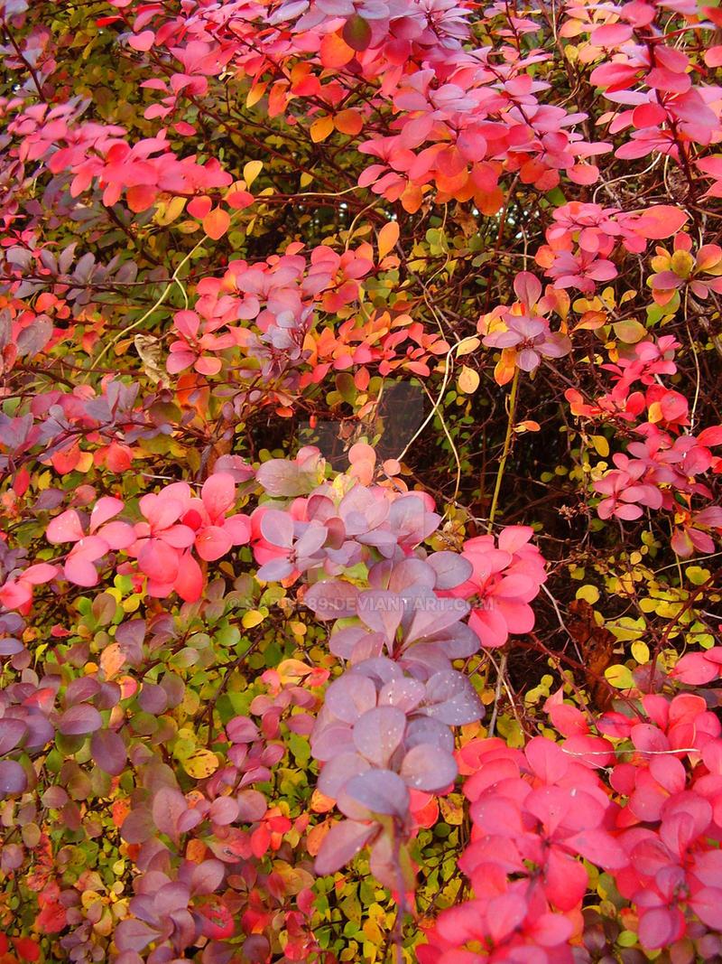 Amazing autumn slightly edited by Sabbie89