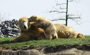 Vicks, the baby polar bear by Sabbie89
