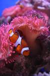 Fino Nemo