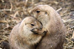 Cuddling by Sabbie89