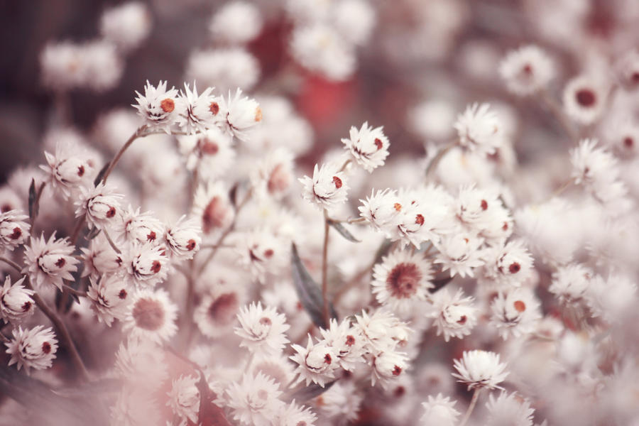 Autumn flowers by Sabbie89