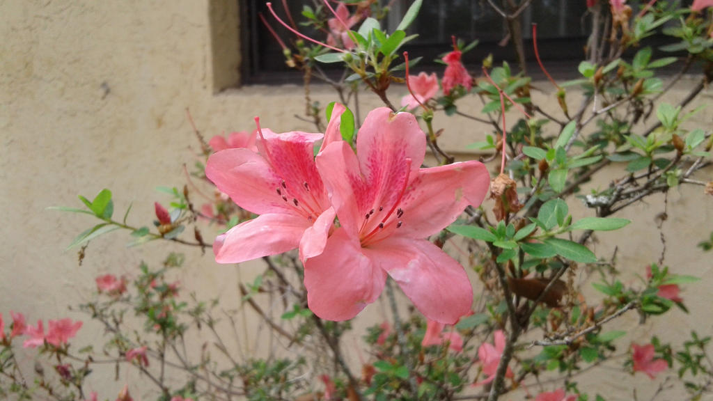 Flower in Florida by Elizabethjunean