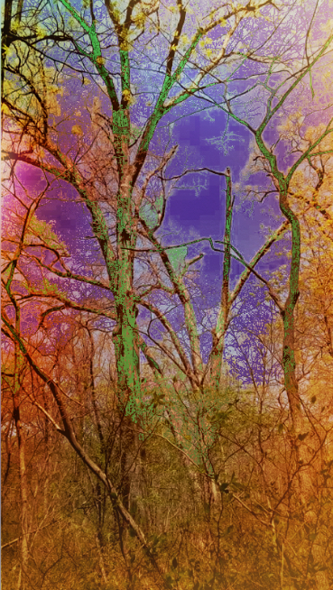 Carpenter Park Trees by Elizabethjunean