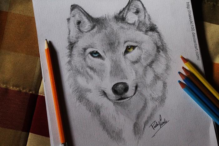 Wolf by Nasuki100