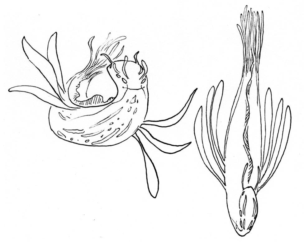 Undersea Creatures 2 by phodyr