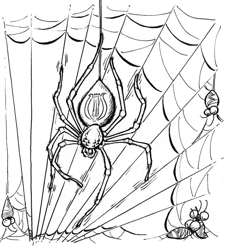 2015 Inktober Drawlloween Spider by phodyr