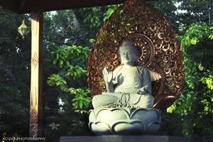 Morning, Buddha by setsunafs
