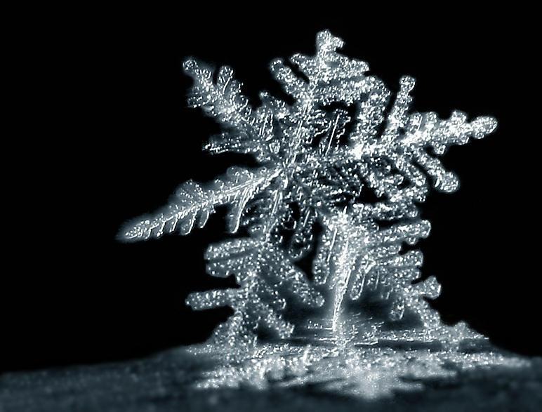 snowflake by felixw