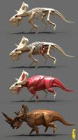pachyrhinosaurus anatomy by epic3d