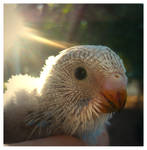 Happy Chickie 043