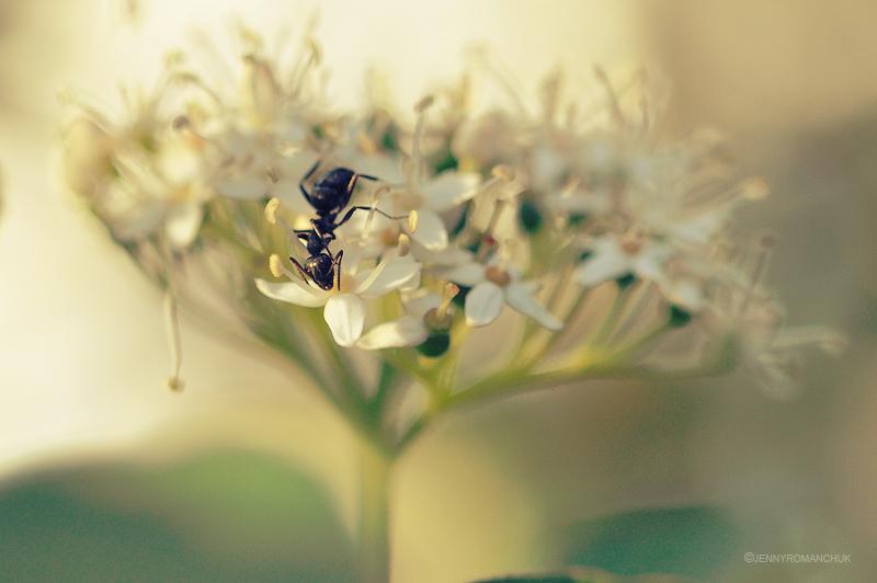 Ant by Ashwings
