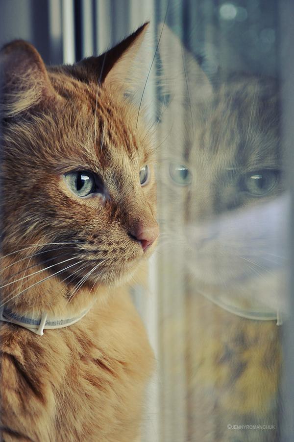 Reflect and Rain by Ashwings