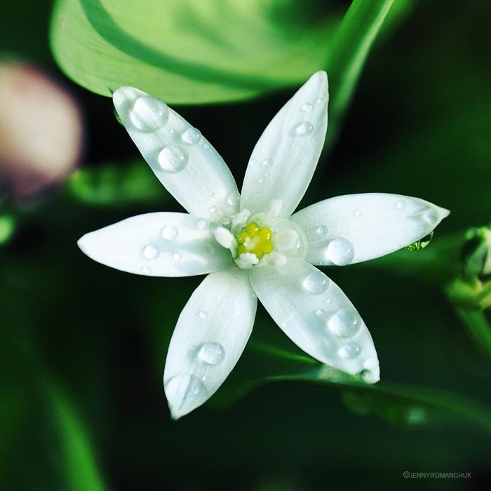 Star by Ashwings
