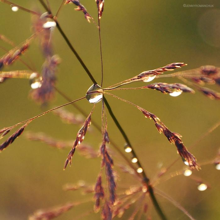 Golden by Ashwings