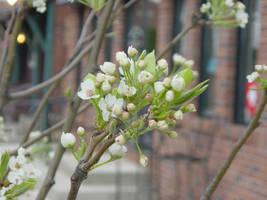 Spring Macro by Azildin