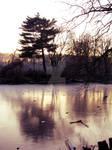reflection on ice by JennColtrane