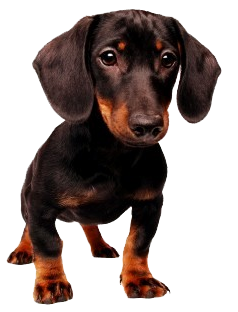 Dog png by amandada1
