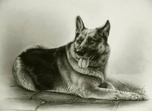 commission shepherd dog