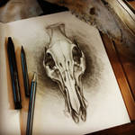 Skull study by Isisnofret