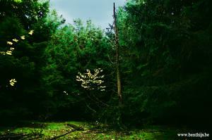 My secret dead tree by BenThijs