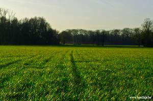 Open Field by BenThijs