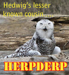 Hedwig's lesser known cousin by DanloTheWild