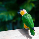 Perched Parrot by panchito469