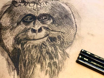Orangutan Sketch
